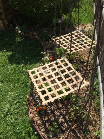 les carrés offrent de conditions de mi-ombre