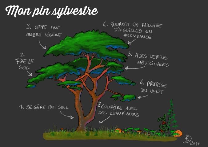 Pin_sylvestre