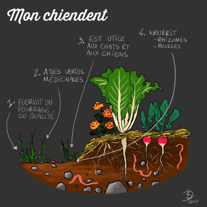 Chiendent