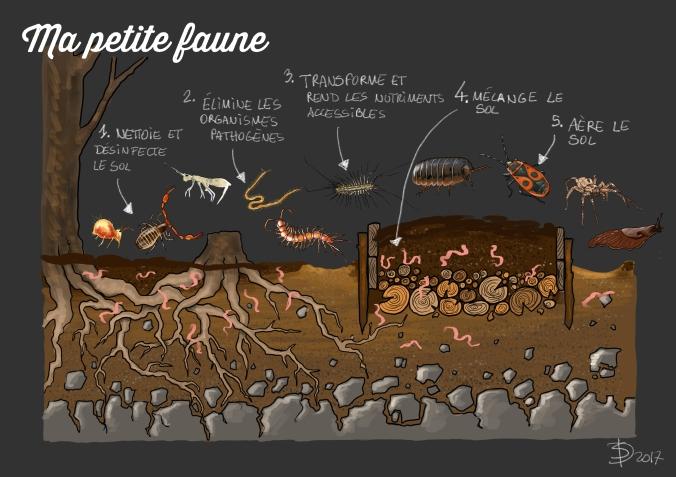 Micro-faune